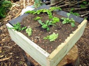 mini green roof