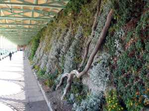 Green wall at Marine Drive, Brighton