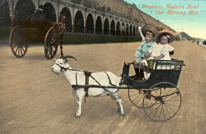 Goat cart rides on Madeira Drive! Royal Pavilion & Museums, Brighton & Hove