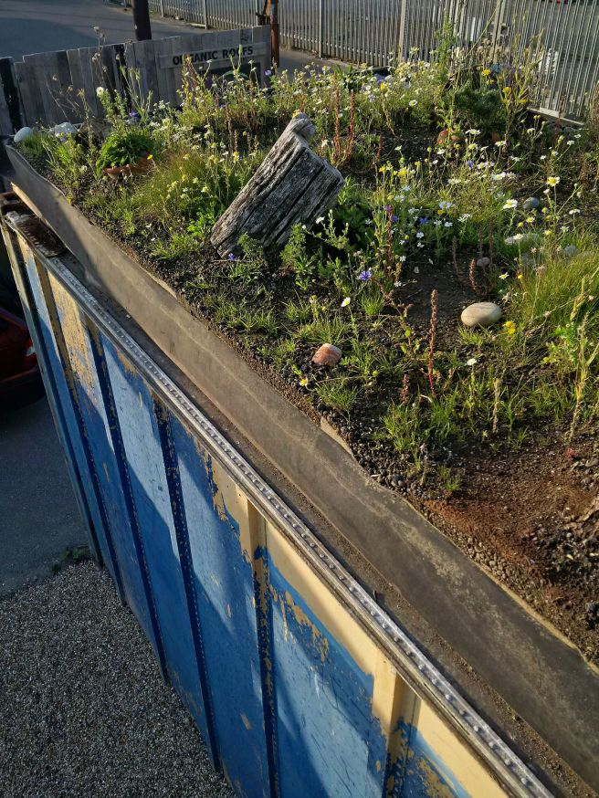 Container green roof at Organic Roofs HQ, Shoreham