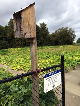 Food growing on green roof, Olympia WA