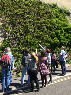 Learning about green walls - Madeira Drive's historic green wall