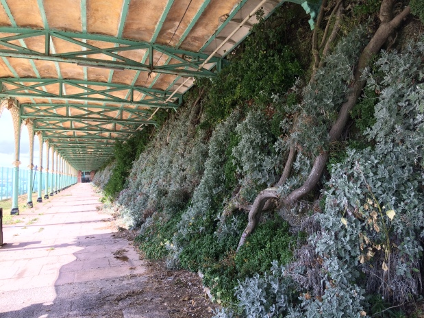 Update on the MT30 Project – Madeira Terracerestoration