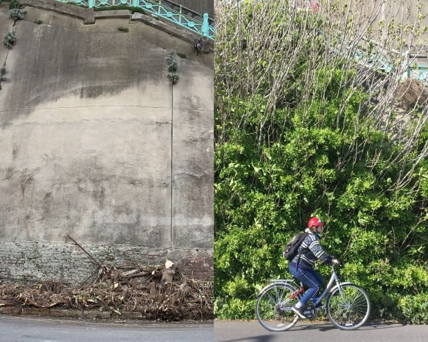 News on Madeira Drive green wall – recent loss, new planting and a change of scope